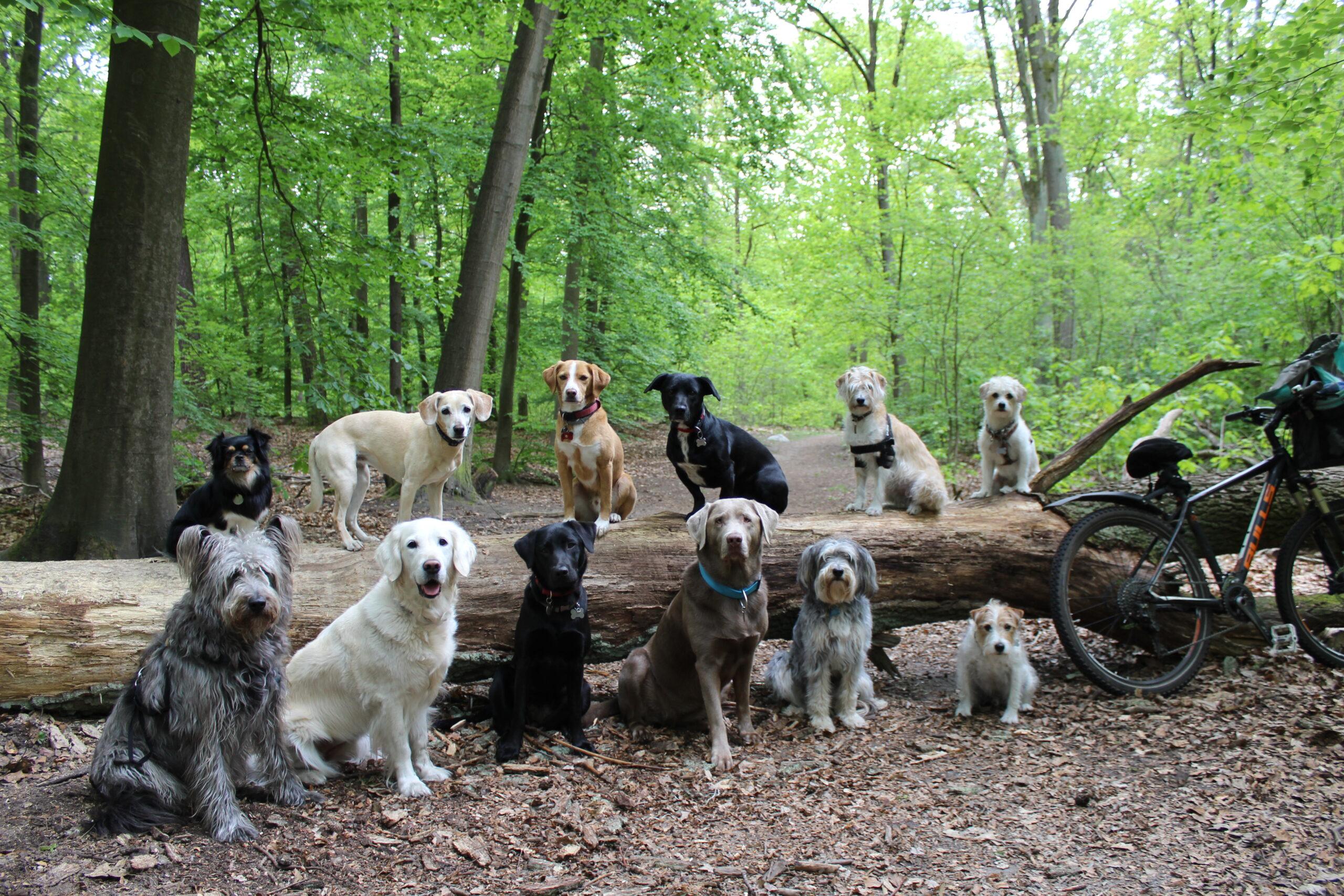 Hunde auf Baumstamm Kopie